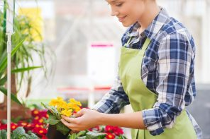 Flower Boxes: Tips that will save you money this spring image